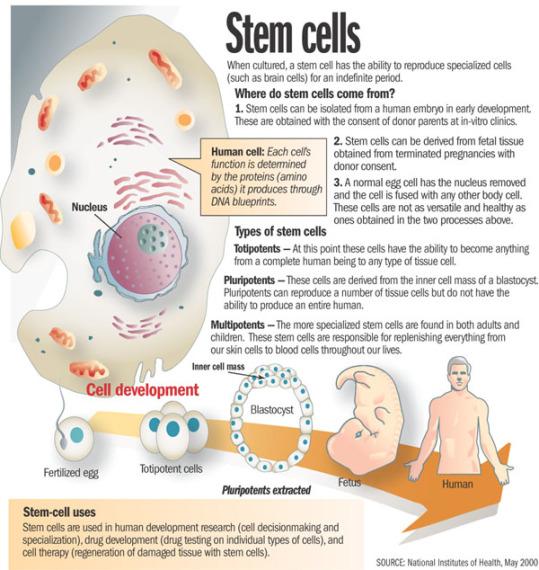 stem-cell-diagram-nih